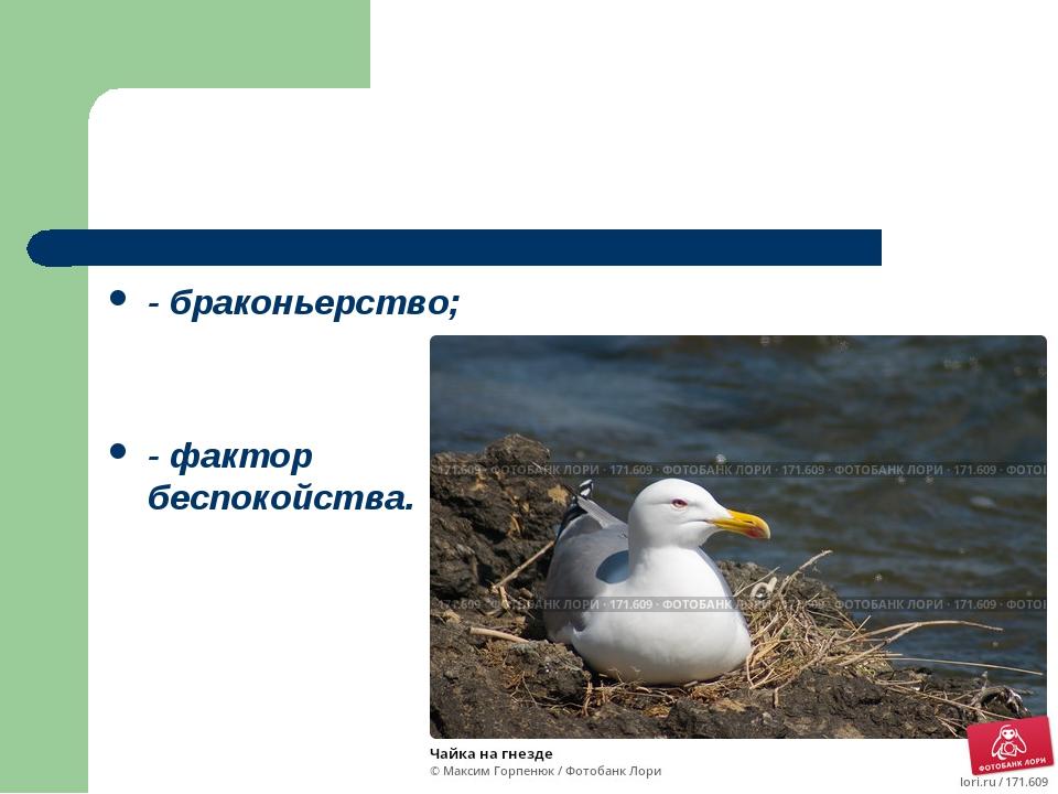 - браконьерство; - фактор беспокойства.