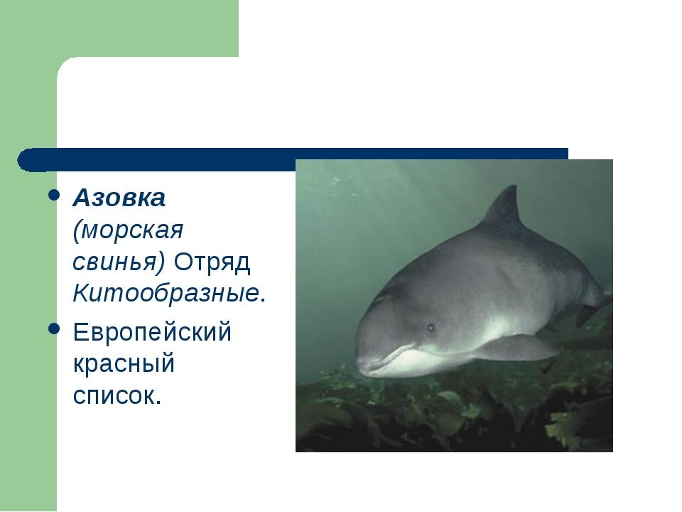 Азовка (морская свинья) Отряд Китообразные. Европейский красный список.