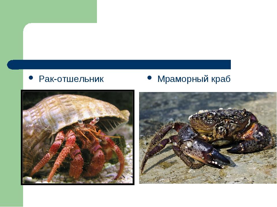 Рак-отшельник Мраморный краб