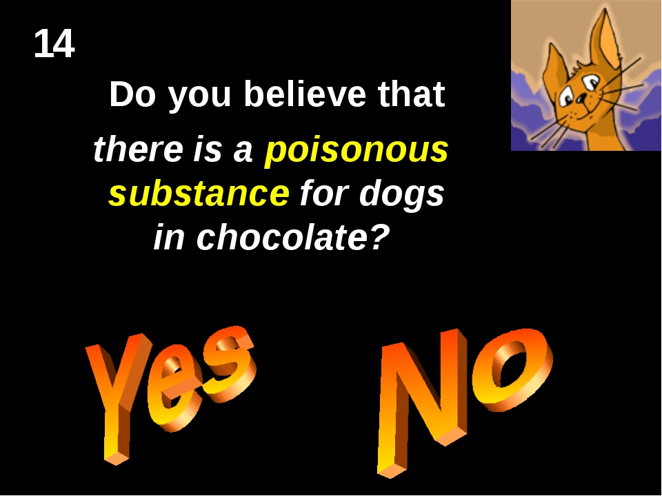 14 Do you believe that there is a poisonous substance for dogs in chocolate?
