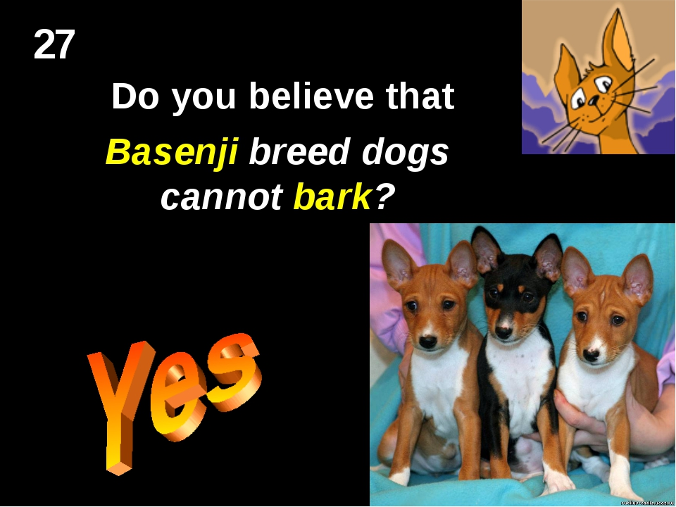 27 Do you believe that Basenji breed dogs cannot bark?