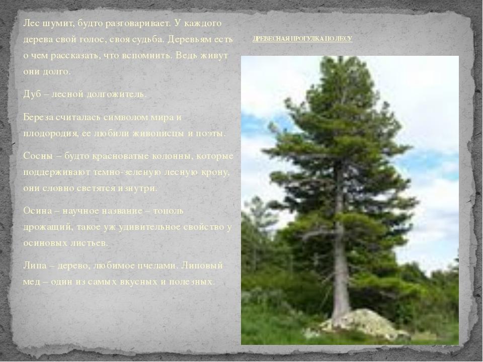 Лес шумит, будто разговаривает. У каждого дерева свой голос, своя судьба. Дер...