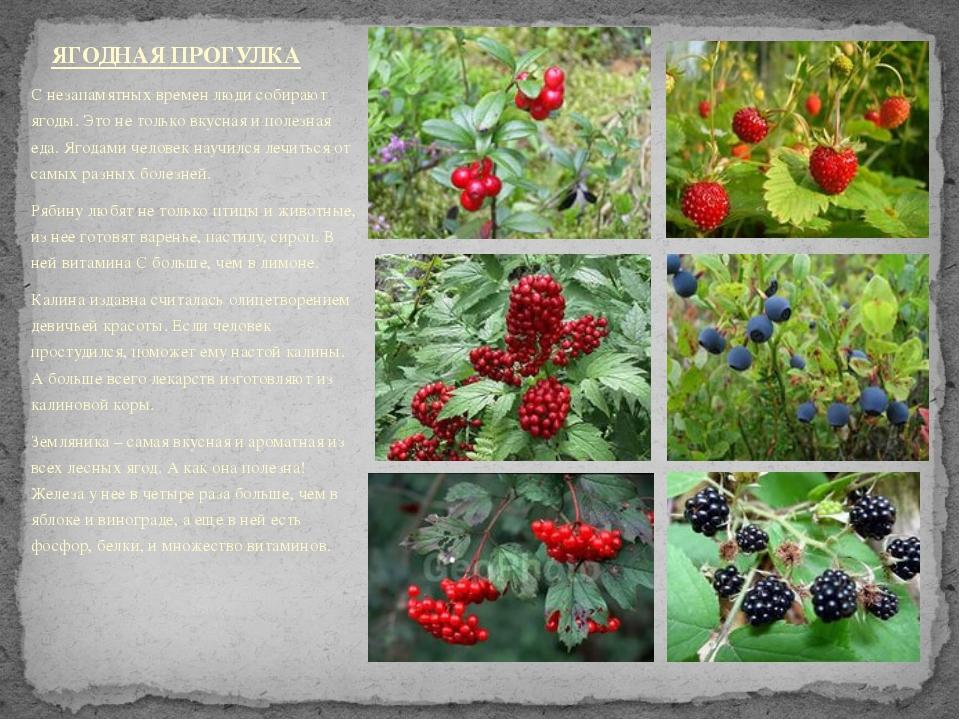 С незапамятных времен люди собирают ягоды. Это не только вкусная и полезная е...