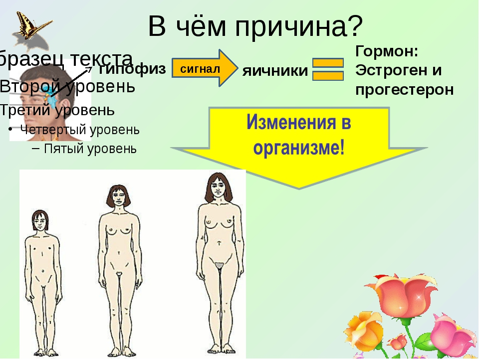 В чём причина? сигнал гипофиз яичники Гормон: Эстроген и прогестерон