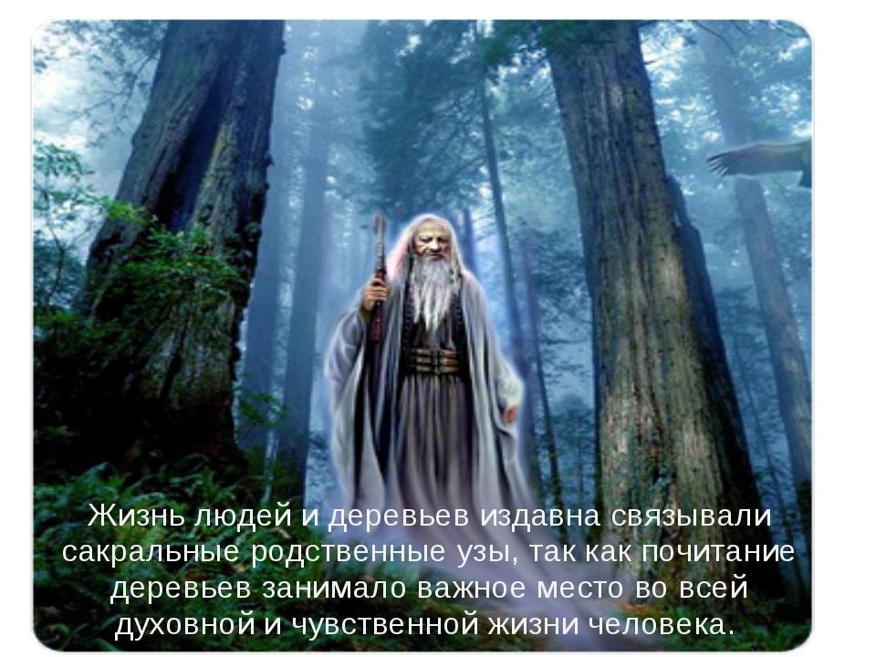 Жизнь людей и деревьев издавна связывали сакральные родственные узы, так как...