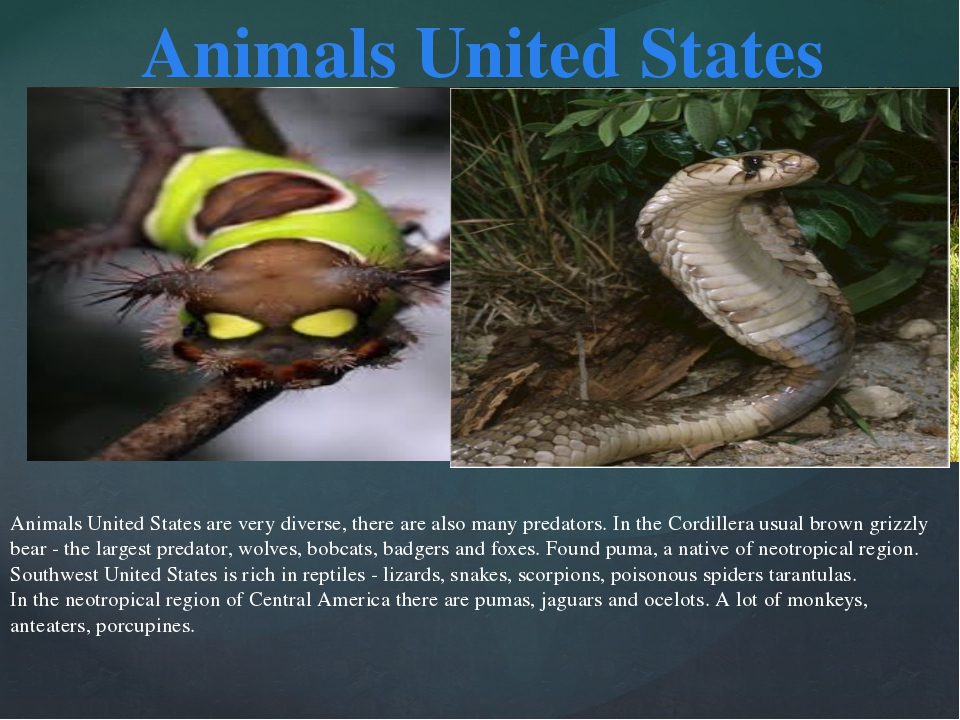 Animals United States are very diverse, there are also many predators. In the...