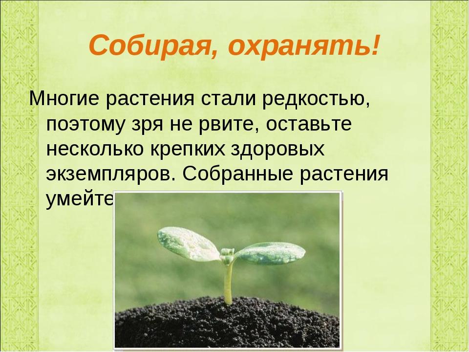 Собирая, охранять! Многие растения стали редкостью, поэтому зря не рвите, ост...