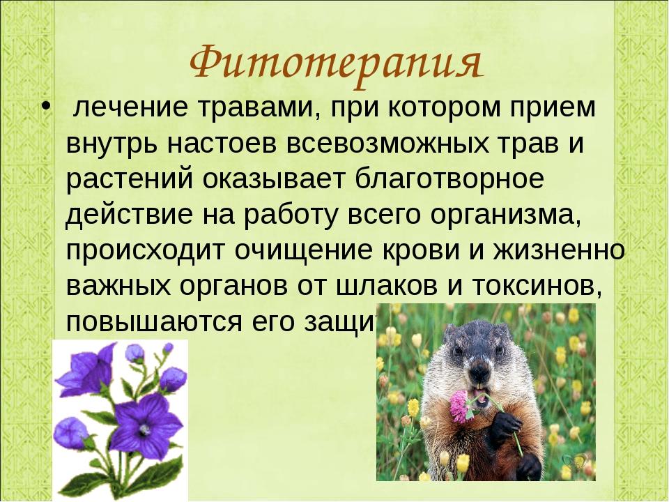 Фитотерапия лечение травами, при котором прием внутрь настоев всевозможных тр...