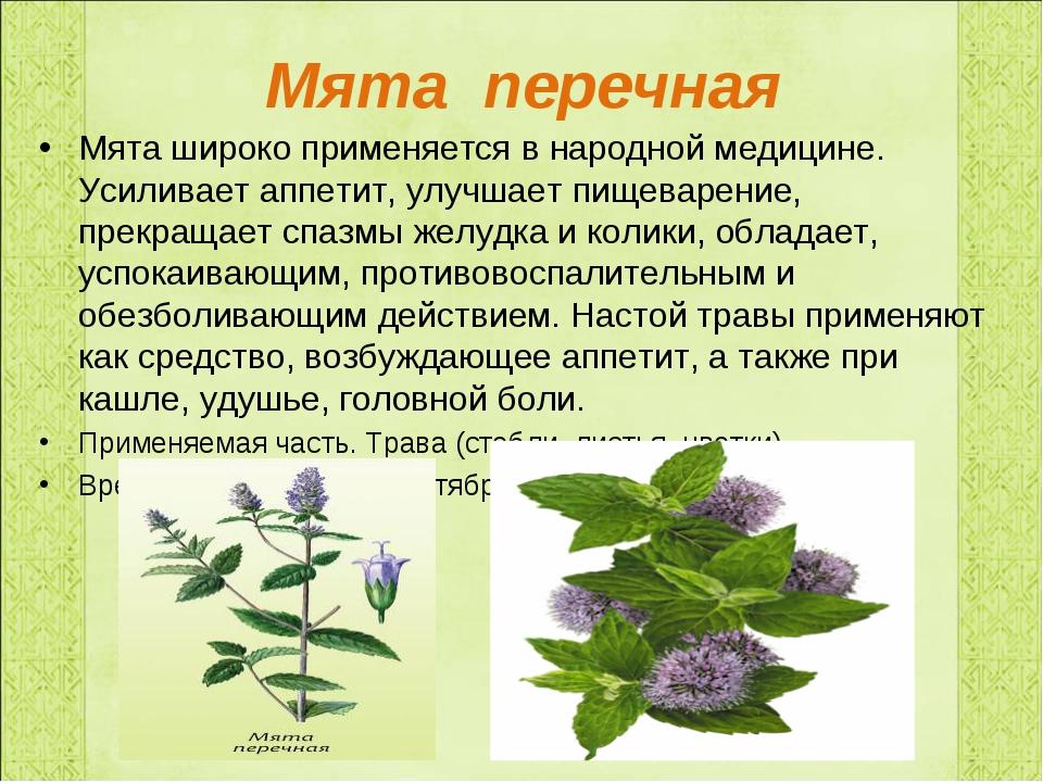 Мята перечная Мята широко применяется в народной медицине. Усиливает аппетит,...