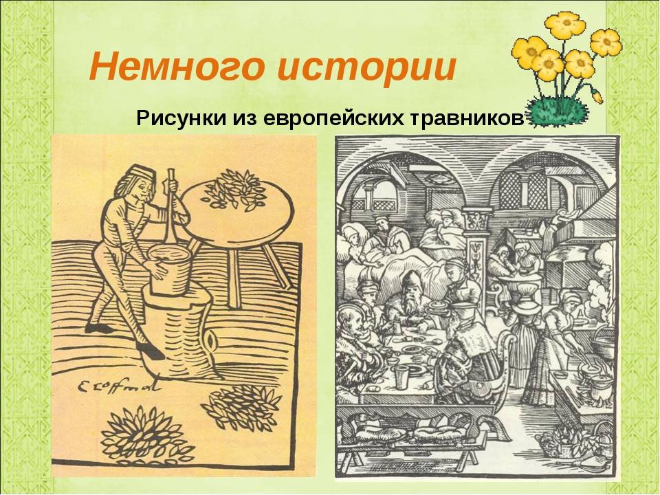 Рисунки из европейских травников Немного истории