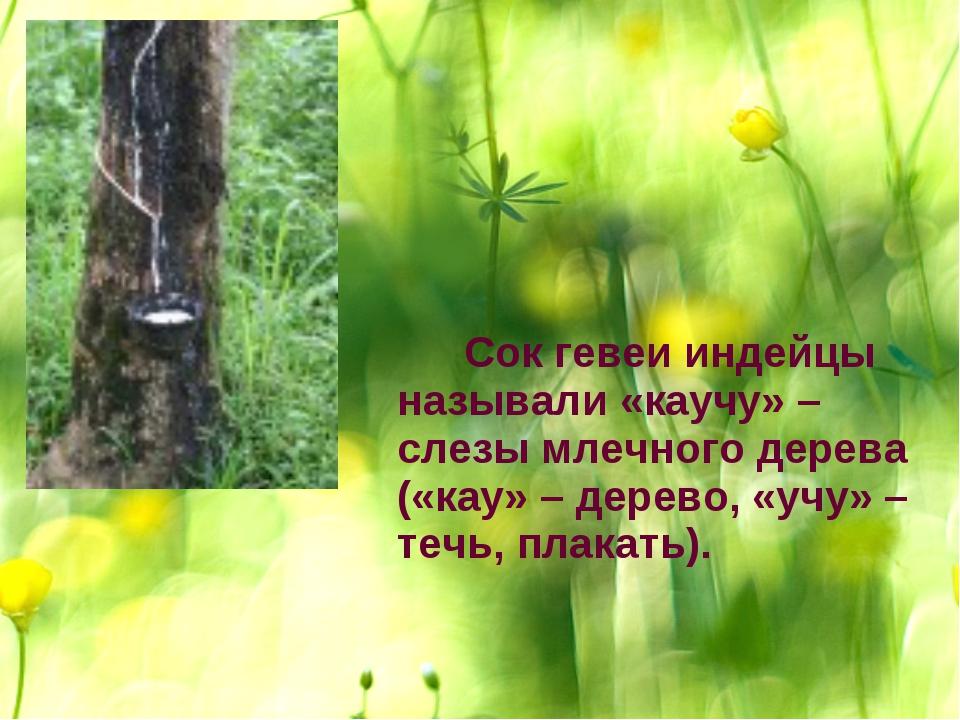 Сок гевеи индейцы называли «каучу» – слезы млечного дерева («кау» – дерево,...