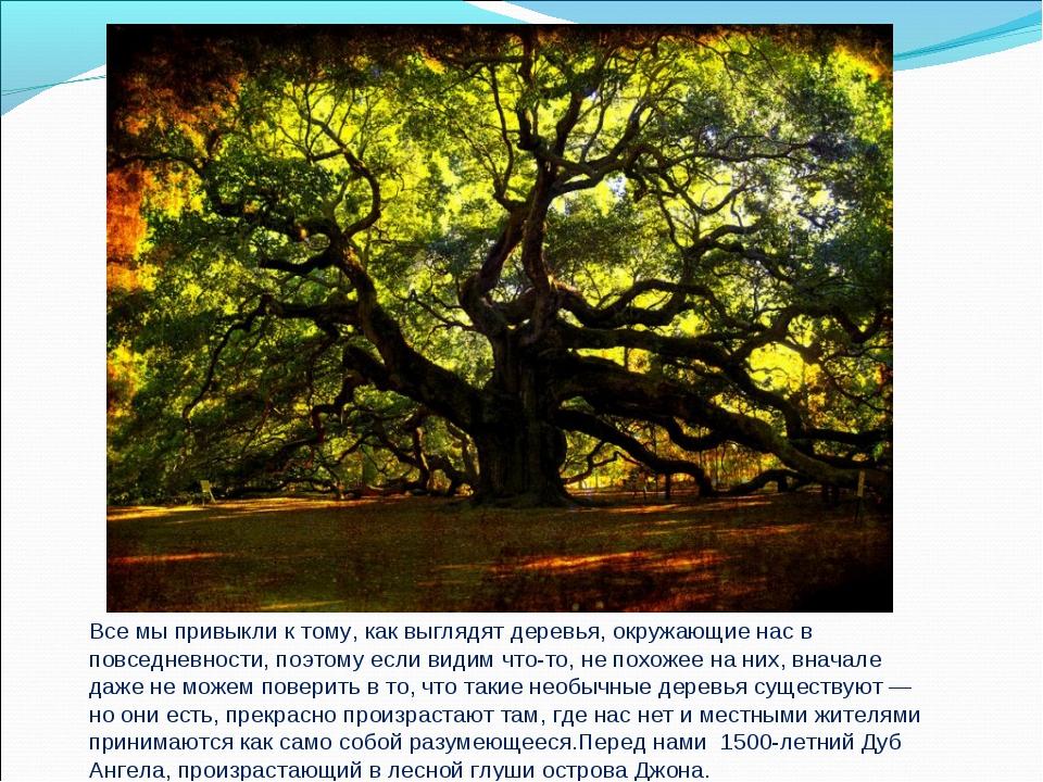 Все мы привыкли к тому, как выглядят деревья, окружающие нас в повседневности...