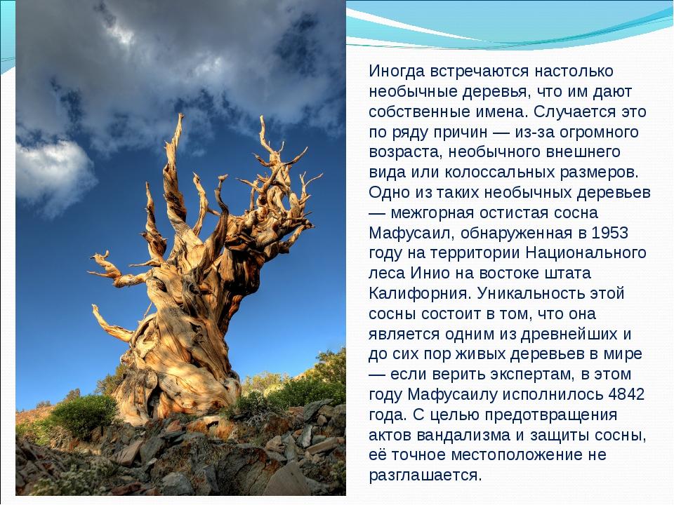 Иногда встречаются настолько необычные деревья, что им дают собственные имена...