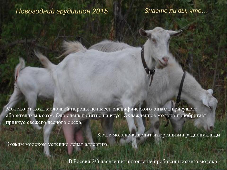 Козы практически не болеют туберкулезом. У коз большой и хорошо развитый голо...