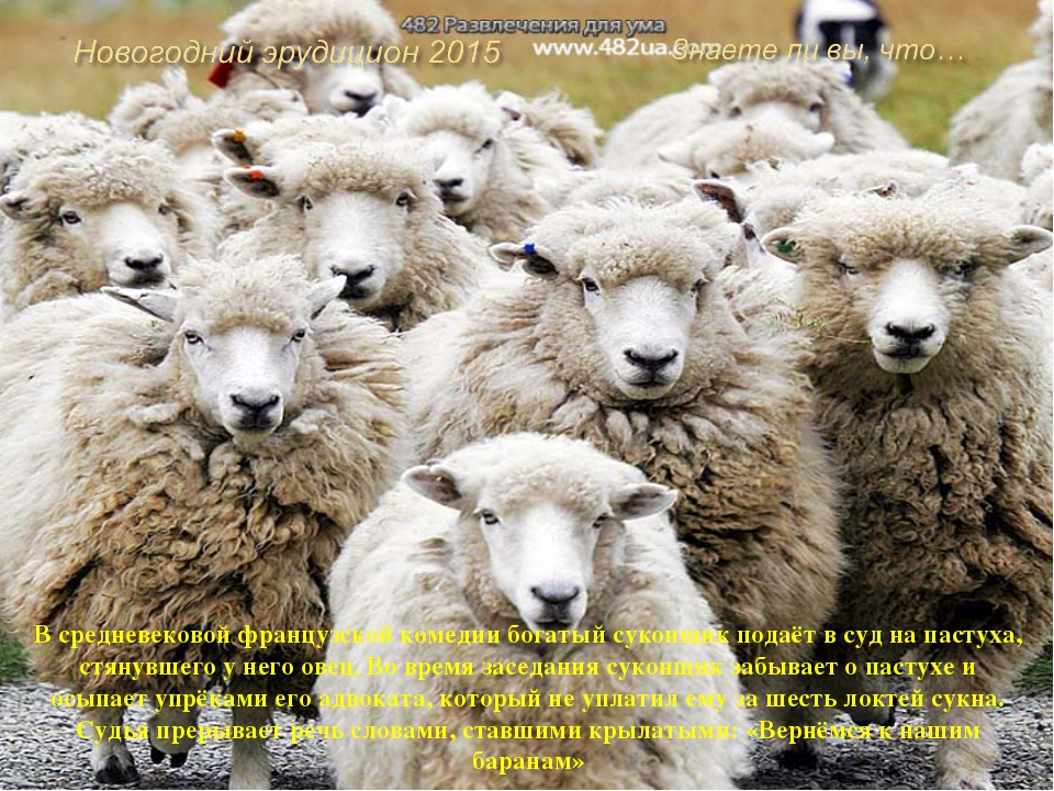 Овцы отличаются острым и чувствительным слухом. Громких звуков они боятся. Тр...