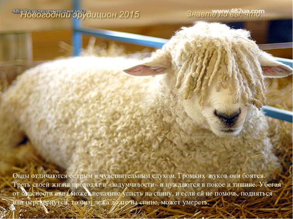 Существует порода домашних коз под названием обморочные, или миотонические к...