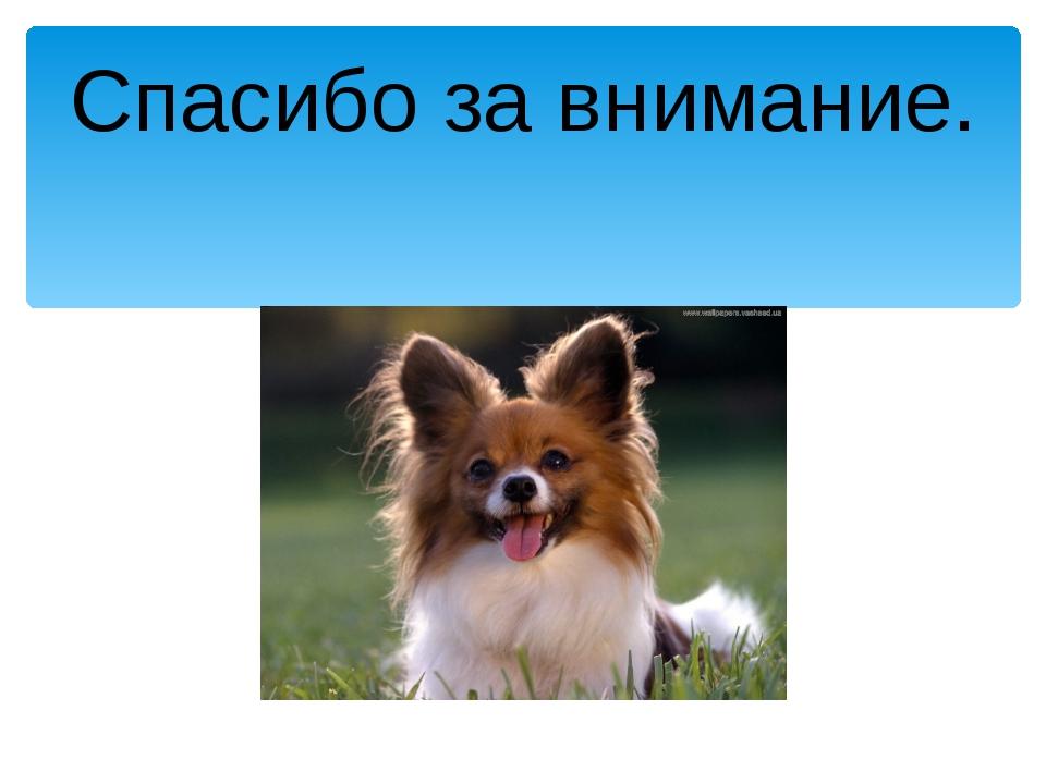 рвался картинка собаки спасибо за внимание словам дизайнера, они