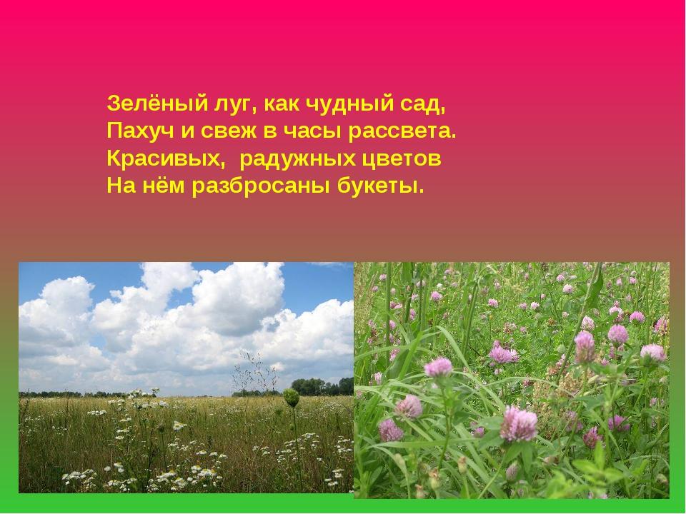 Зелёный луг, как чудный сад, Пахуч и свеж в часы рассвета. Красивых, радужных...