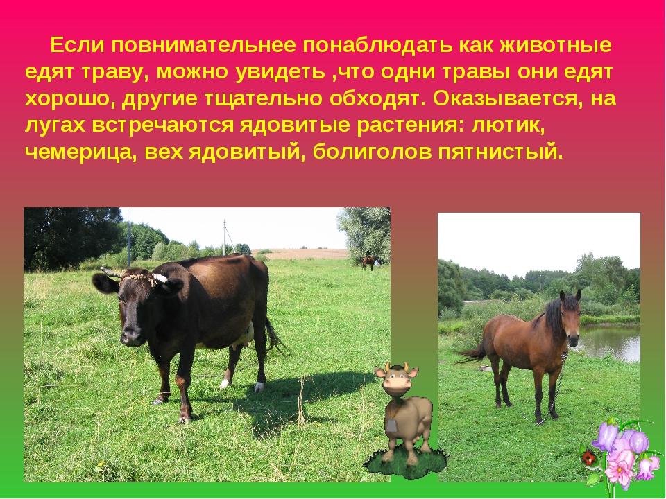 Если повнимательнее понаблюдать как животные едят траву, можно увидеть ,что...