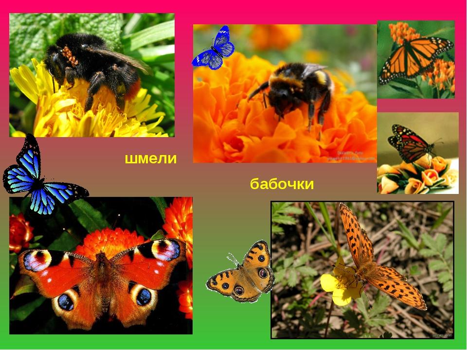 шмели бабочки