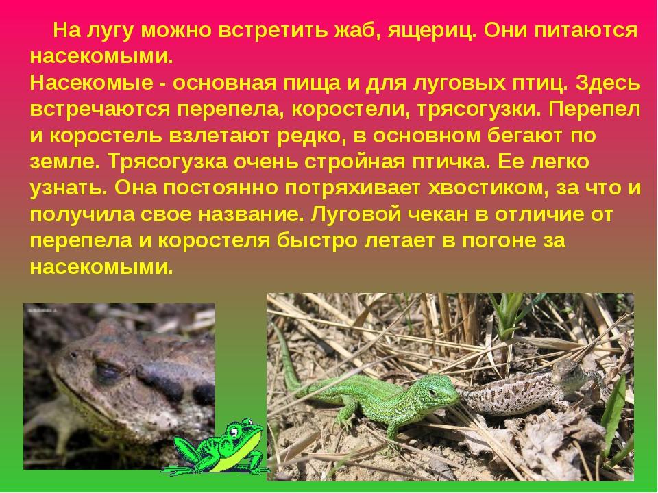 На лугу можно встретить жаб, ящериц. Они питаются насекомыми. Насекомые - ос...