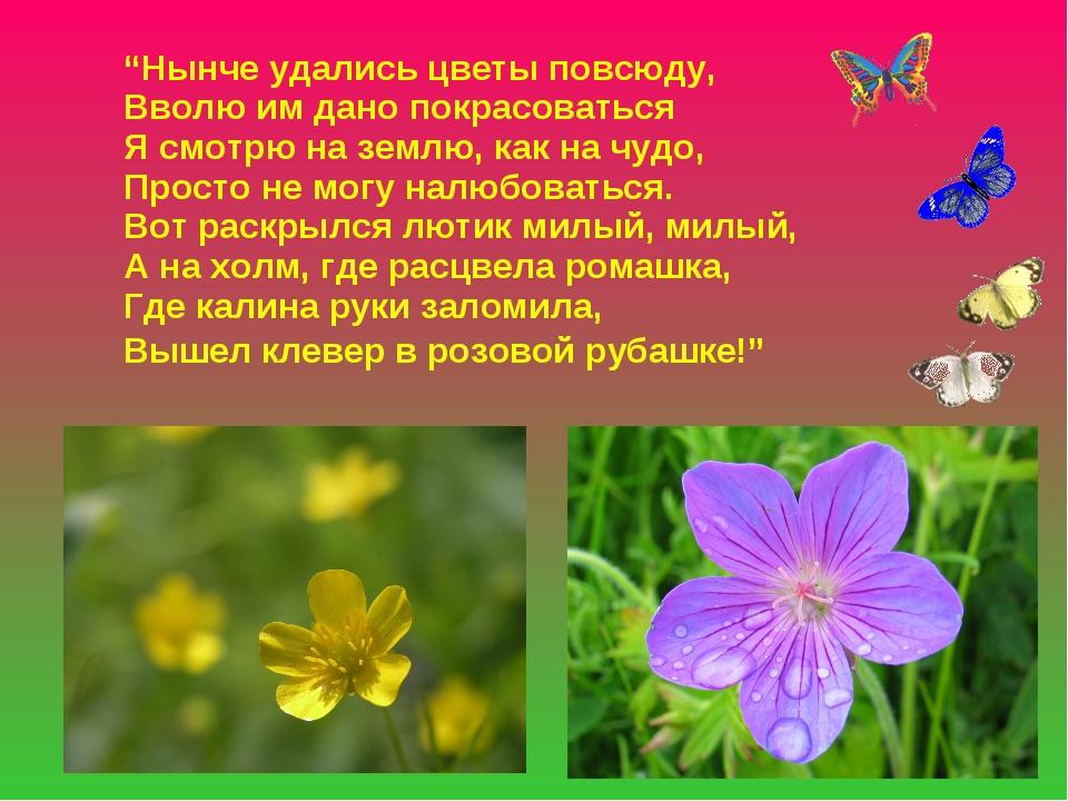 """""""Нынче удались цветы повсюду, Вволю им дано покрасоваться Я смотрю на землю,..."""