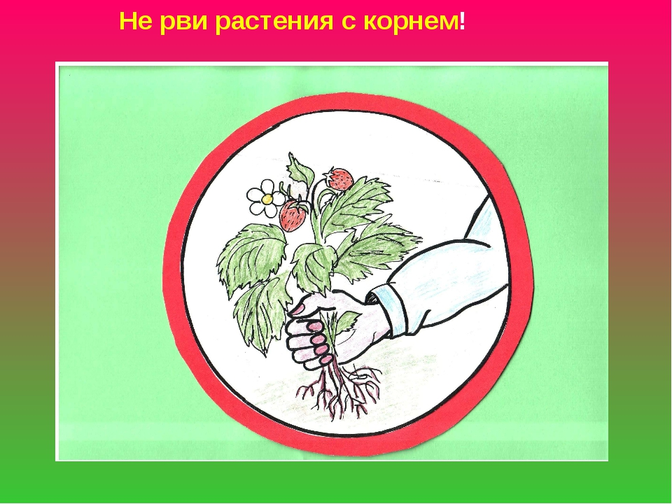 Не рви растения с корнем!