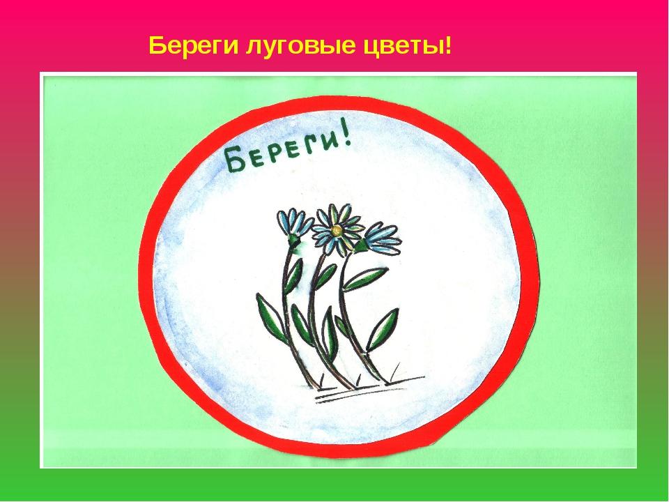 Береги луговые цветы!