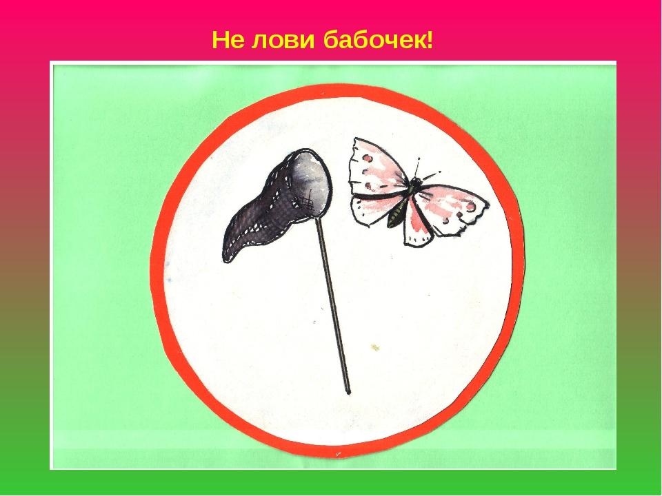 Не лови бабочек!
