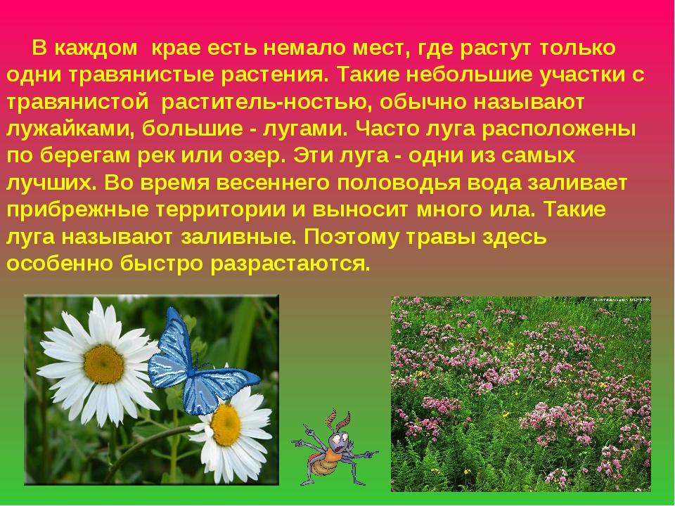В каждом крае есть немало мест, где растут только одни травянистые растения....