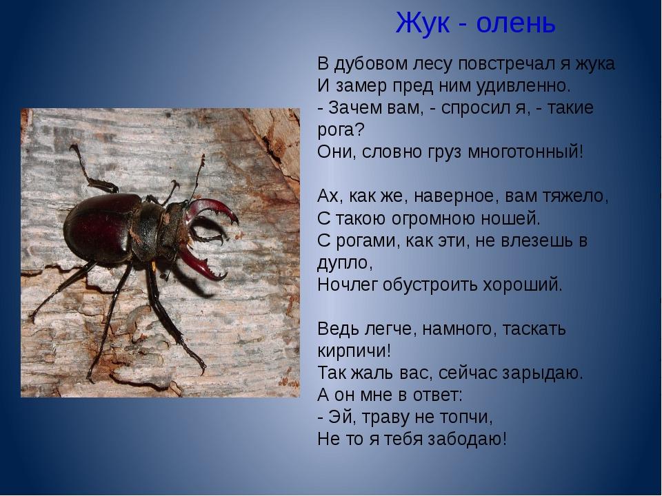 Жук - олень  В дубовом лесу повстречал я жука И замер пред ним удивленно. -...