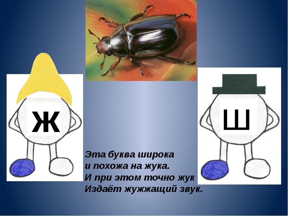 ж ш Эта буква широка и похожа на жука. И при этом точно жук Издаёт жужжащий з...