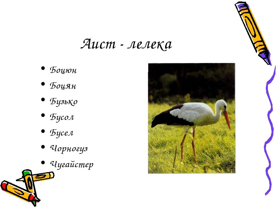 Аист - лелека Боцюн Боцян Бузько Бусол Бусел Чорногуз Чугайстер