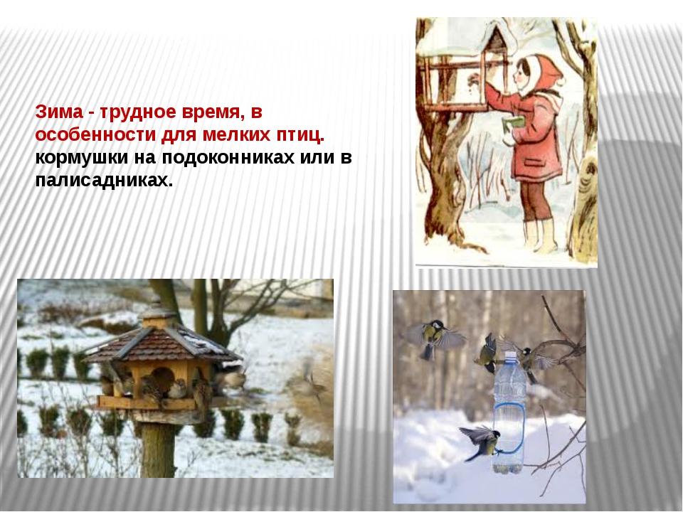 Зима - трудное время, в особенности для мелких птиц. кормушки на подоконниках...