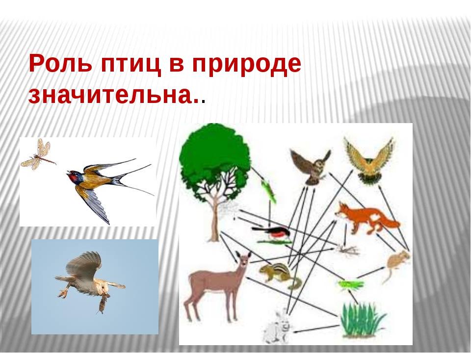 Роль птиц в природе значительна..