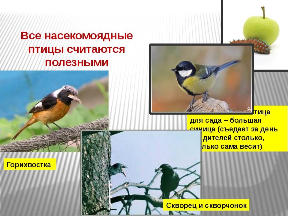 Все насекомоядные птицы считаются полезными Горихвостка Самая полезная птица...
