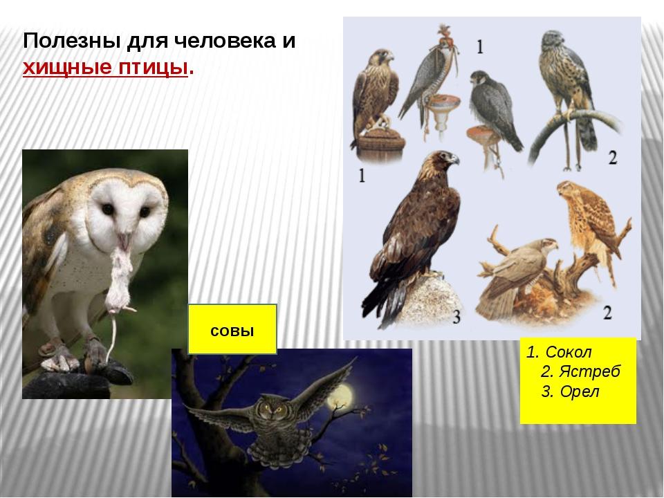 Полезны для человека и хищные птицы. 1. Сокол  2. Ястреб  3. Орел  совы