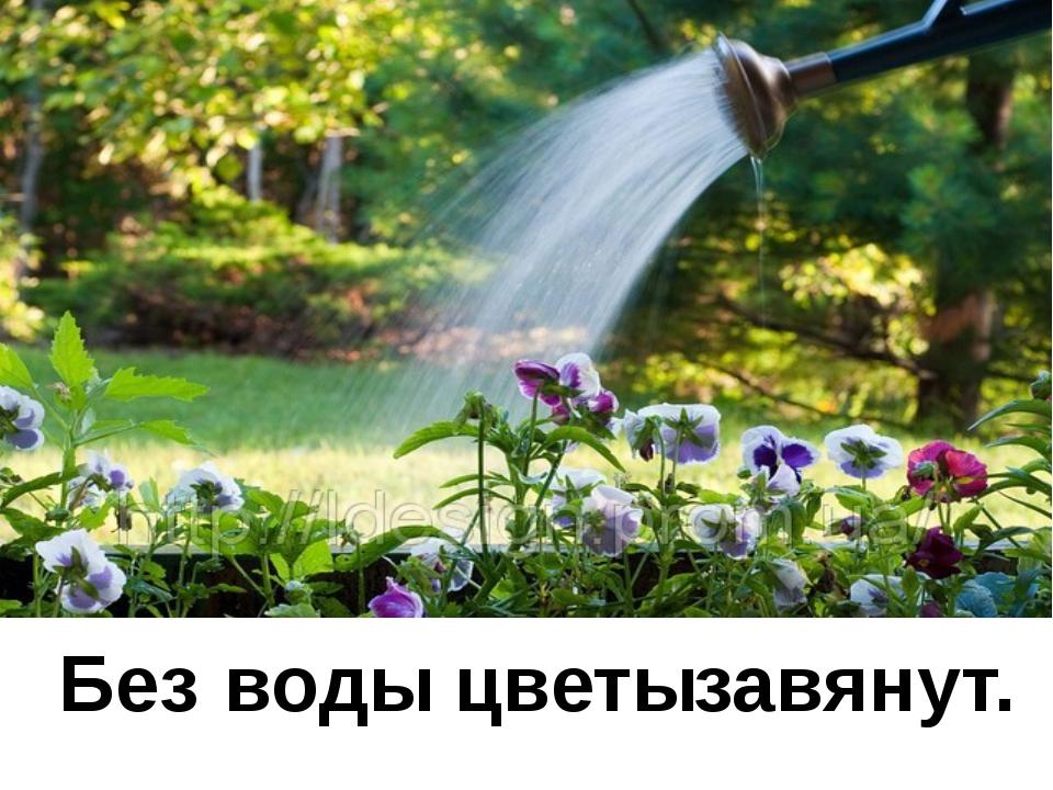 Без воды цветы завянут.