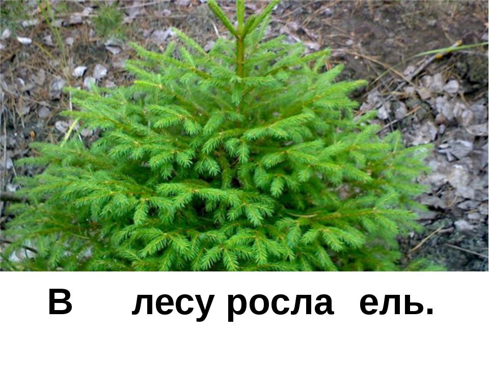 В лесу росла ель.