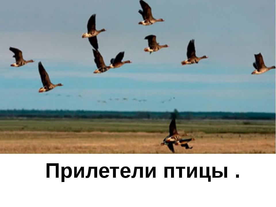 Прилетели птицы .