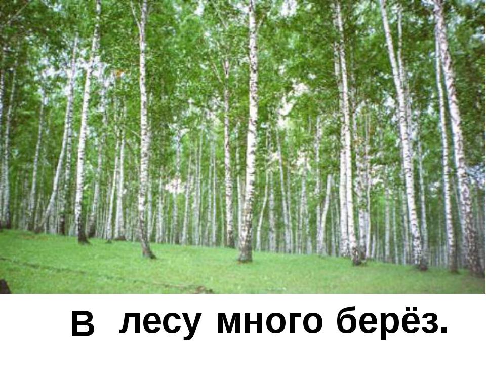 много лесу В берёз.