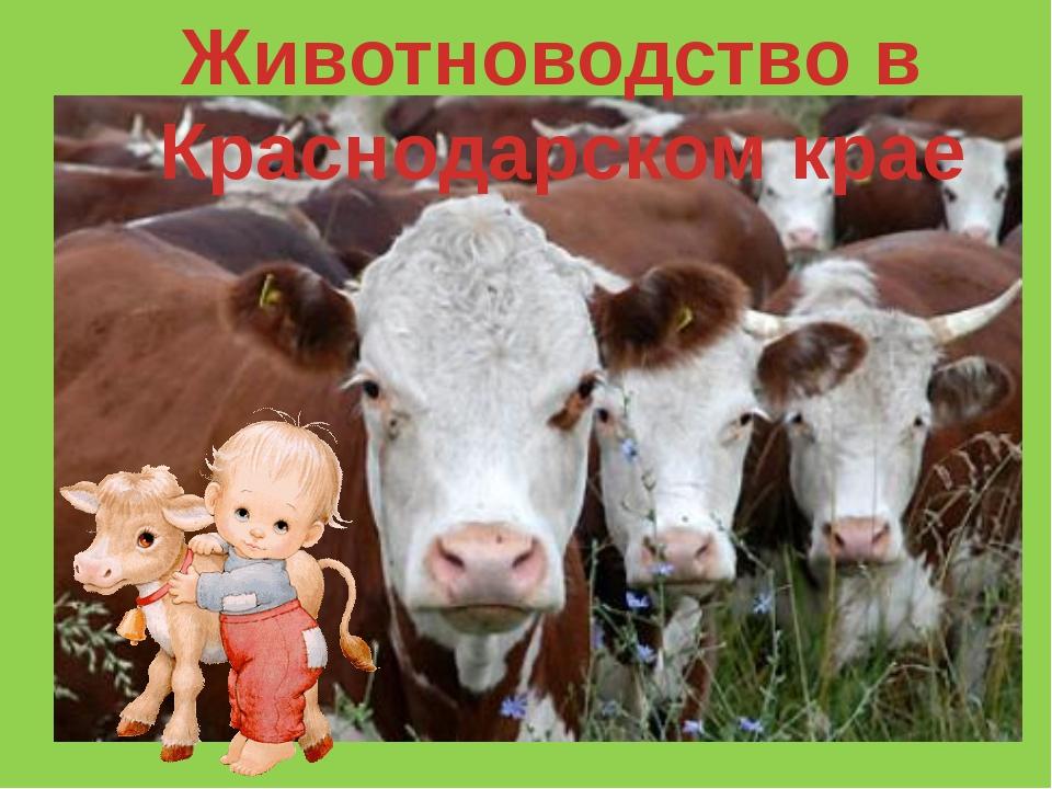 Животноводство в Краснодарском крае
