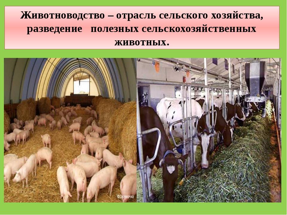 Животноводство – отрасль сельского хозяйства, разведение полезных сельскохозя...