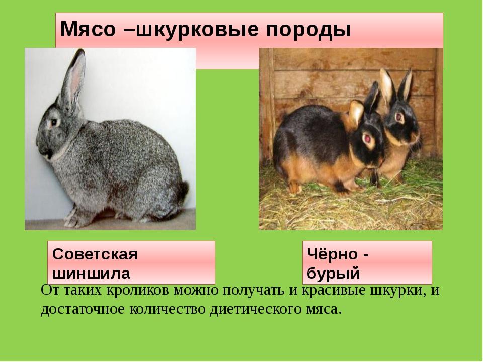 Мясо –шкурковые породы кроликов От таких кроликов можно получать и красивые ш...