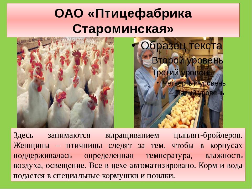 ОАО «Птицефабрика Староминская» Здесь занимаются выращиванием цыплят-бройлеро...