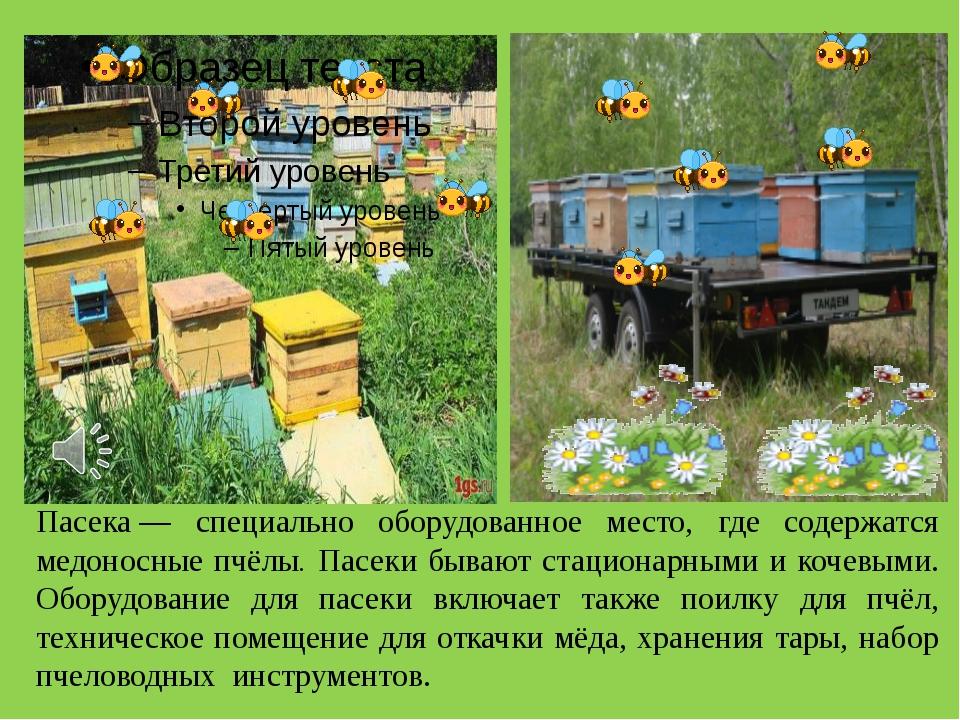 Пасека— специально оборудованное место, где содержатся медоносные пчёлы. Пас...