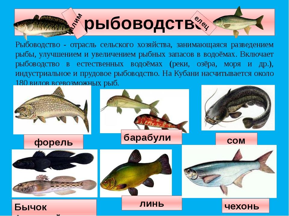 рыбоводство Рыбоводство - отрасль сельского хозяйства, занимающаяся разведени...