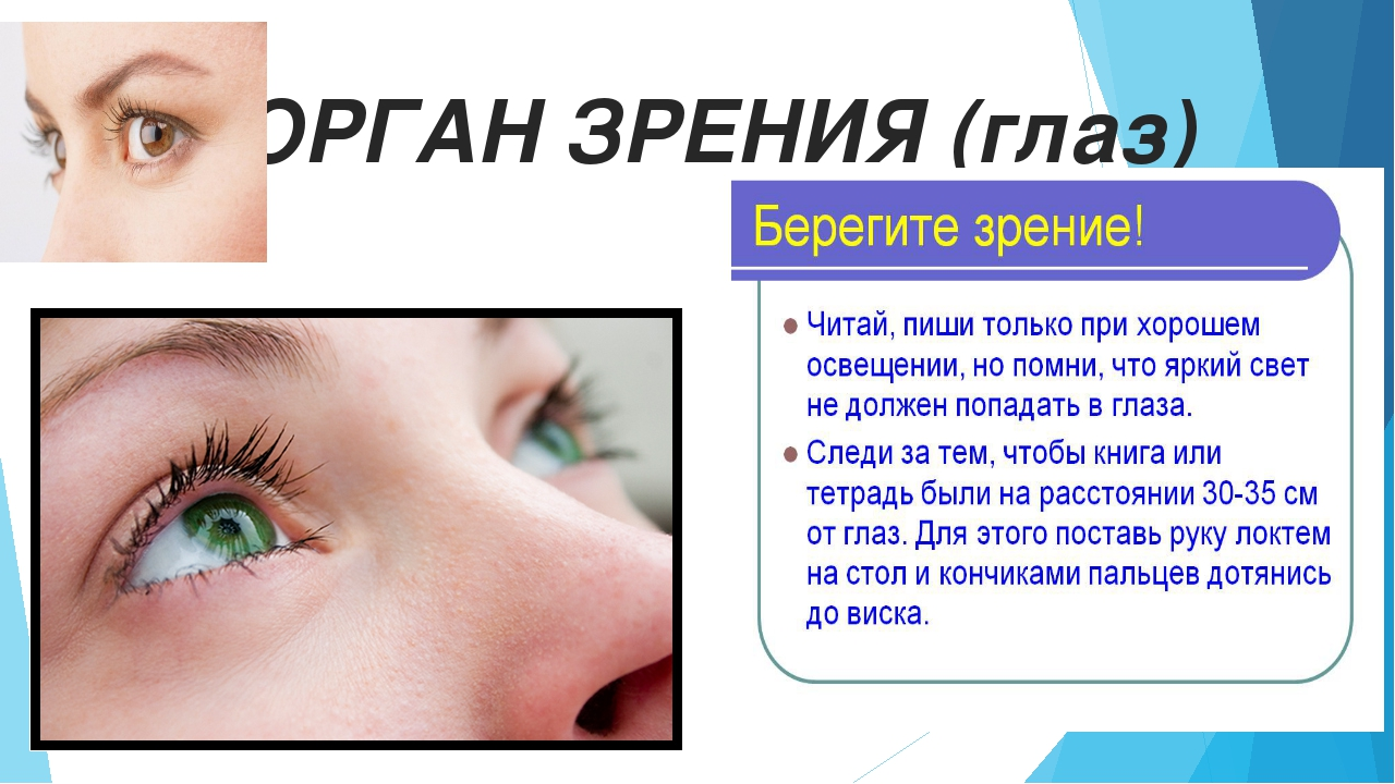 ОРГАН ЗРЕНИЯ (глаз)