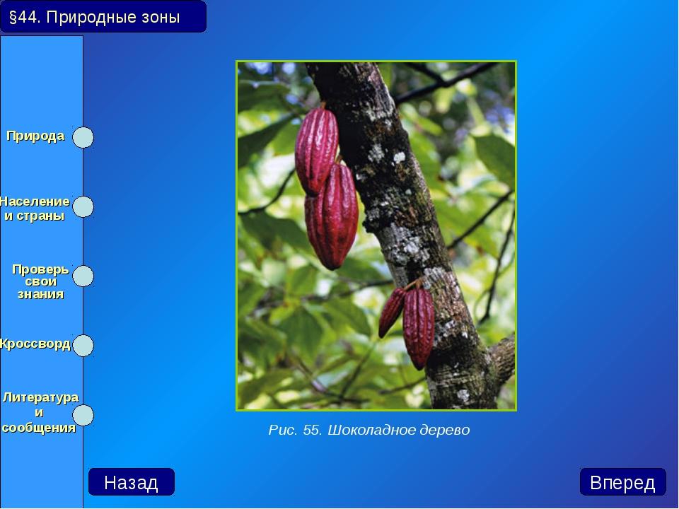 Назад Вперед Рис. 55. Шоколадное дерево §44. Природные зоны Природа Населени...