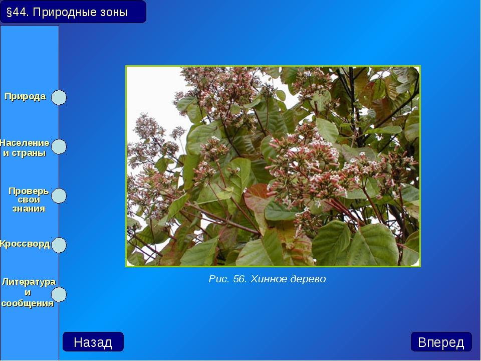 Рис. 56. Хинное дерево Назад Вперед §44. Природные зоны Природа Население и...
